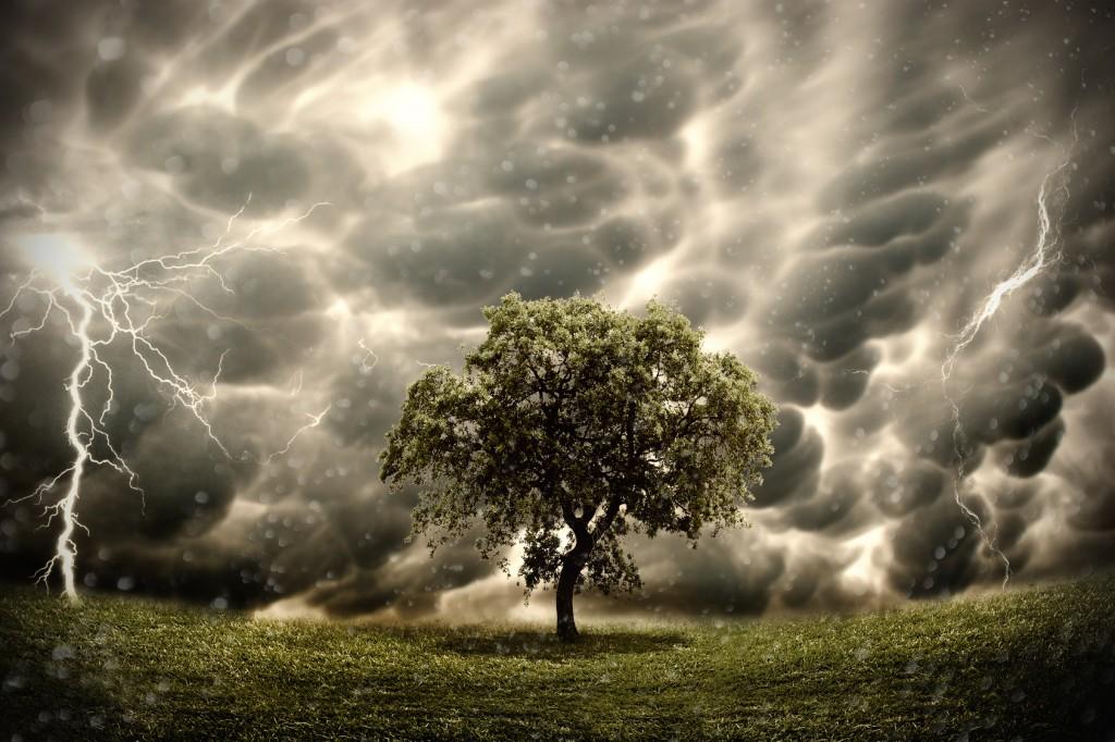 Stormy tree landscape
